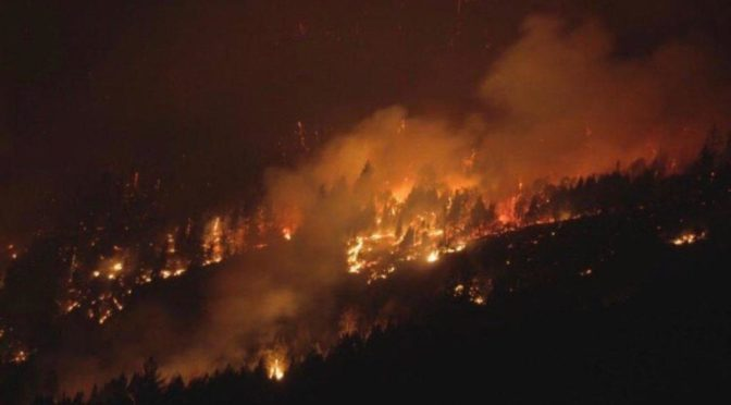 Les forêts du Népal ravagées par le feu