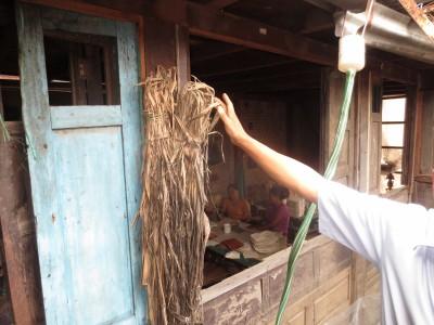 La fibre brute de daphé cannabina